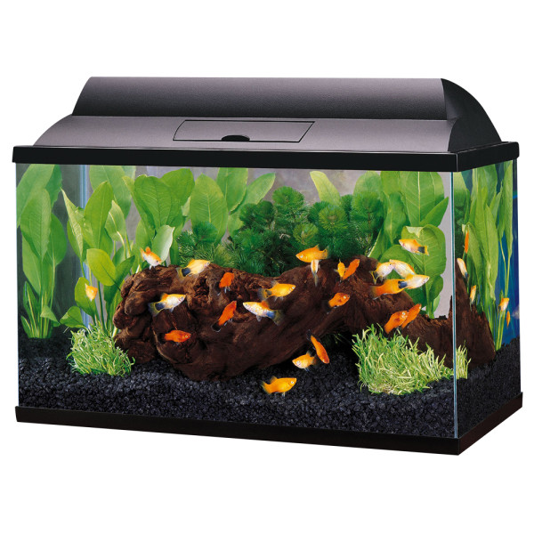Habitats fish e ssentials for Petsmart fish filters